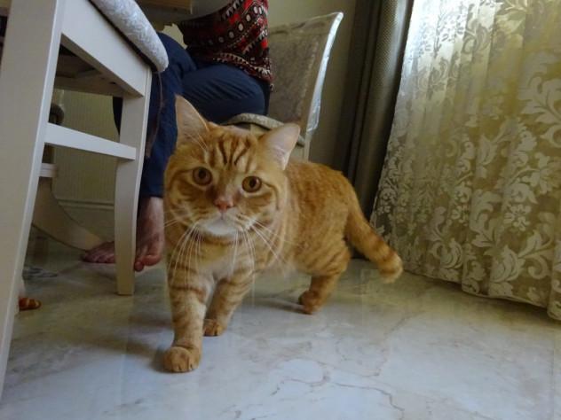 Katze in Odessa