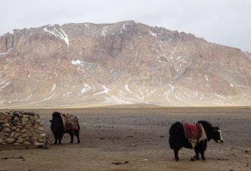 Mit Sack und Pack durch den Pamir (3)