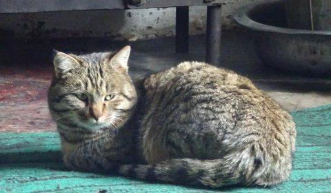 Katze ohne Schnurrhaare