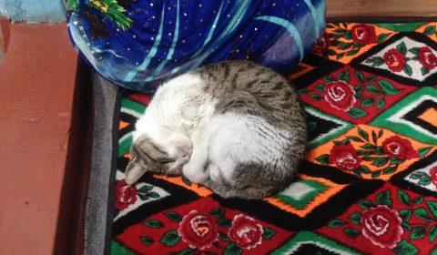 Katze unserer Gastgeber