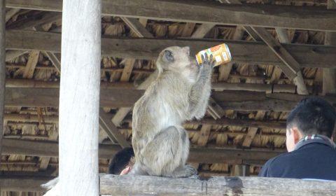 Affe mit Fantadose