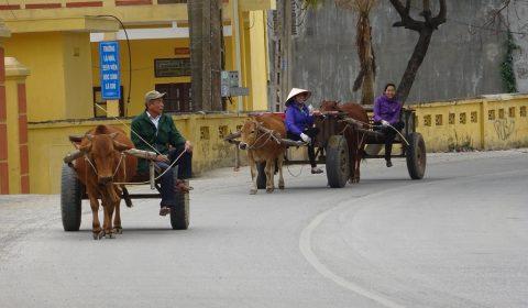 Ochsenkarren entlang des Weges