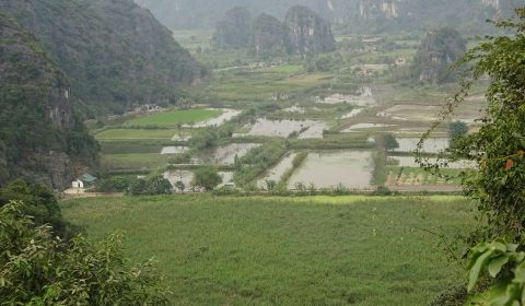 Reisfelder bei Ninh Binh