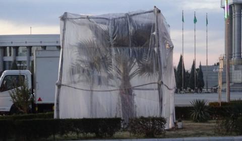 Palmen unter einem Kälteschutz