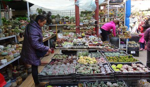 Blumenmarkt in Kunming