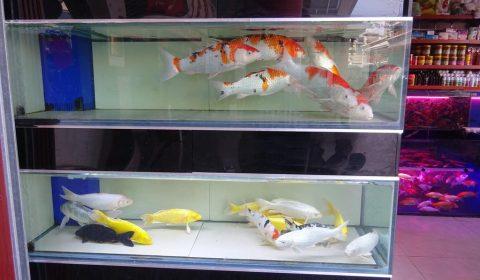 Fische in Kunming