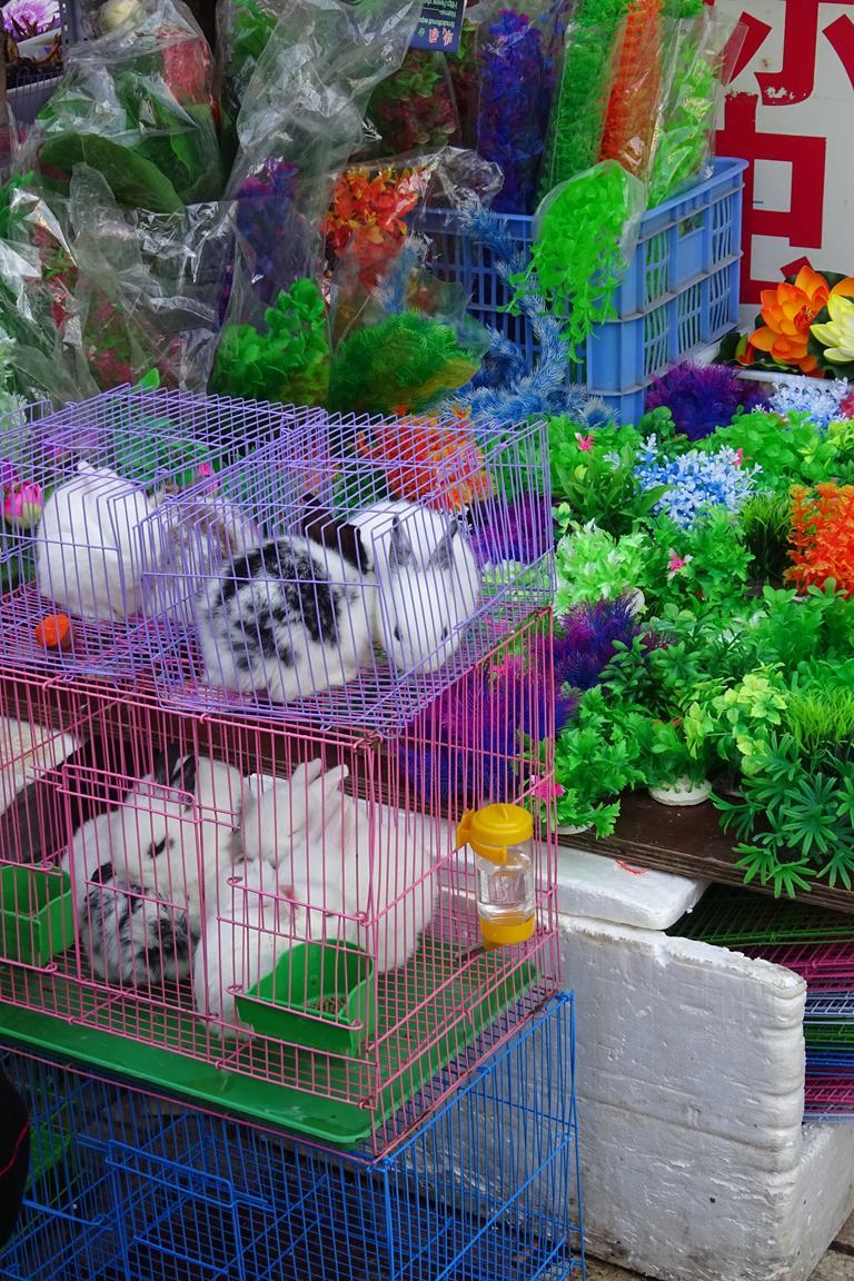 Hasen auf dem Markt in Kunming