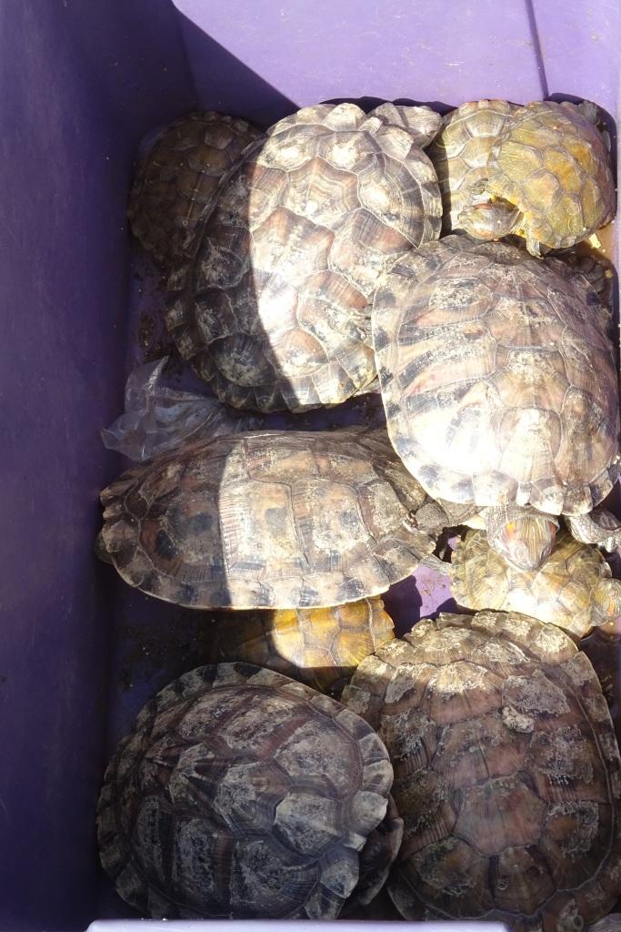 Schildkröten auf dem Markt in Kunming