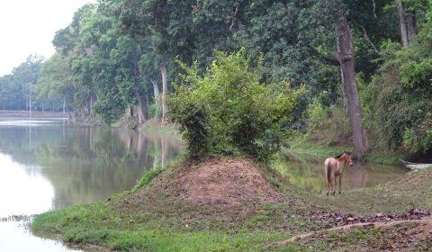 See im Angkor Park
