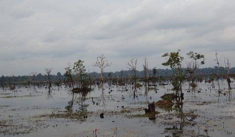 Wasserreservoir der Stadt Angkor