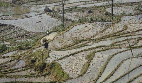 Wanderung über Reisterassen in Sa Pa