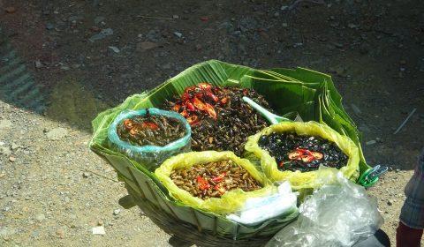 Auswahl an Insekten
