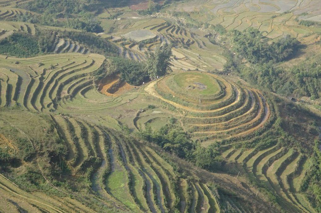 Blick auf die Reisterassen bei Sa Pa